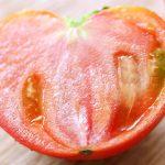 あかね農園のトマトが採れはじめてます