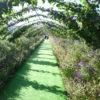 コスモス園に行ってきました。
